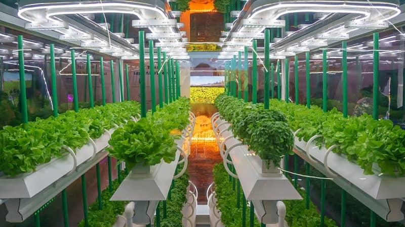 Ventajas de usar iluminación LED en cultivos de horticultura 1